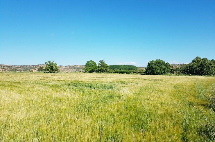 Terreno a pocos kilometros de Alcañiz